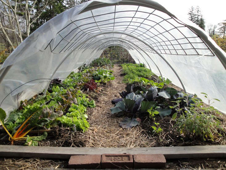 Hearty Crops Like Spinach Can Be Grown Over The Winter With The Added  Protection Of Low Tunnels You Can Make Out Of Hardware Found Conduit Pipe  And ...