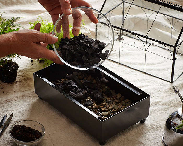 removing mould - Terrarium Care Tip: Removing Mould - Ecoponics May 2021