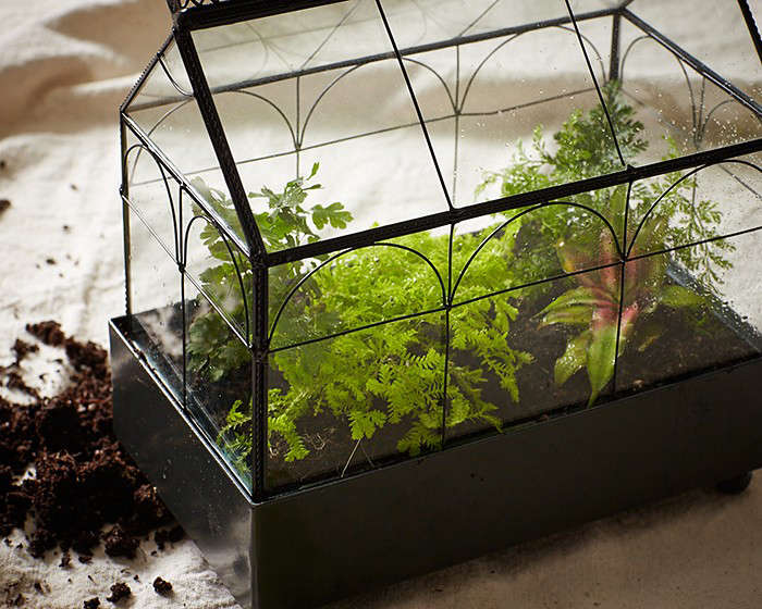 Gardening 101 How To Make A Closed Terrarium Gardenista