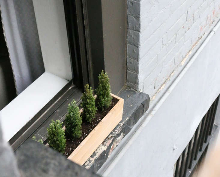 Small Space Diy Tiny Trees For A Winter Window Box Gardenista