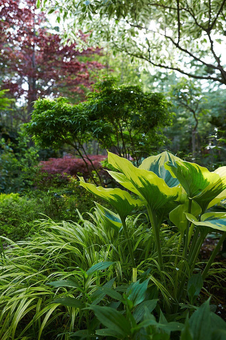Variegated Hostas And Liriope In The Toronto Garden Of Writer Marjorie  Harris. See More In