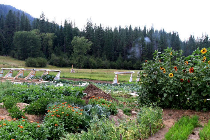 Gone Wild How To Grow Vegetables In The Middle Of Nowhere