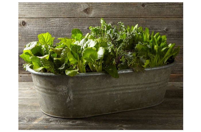 Lovely 10 Easy Pieces: Galvanized Trough Planters