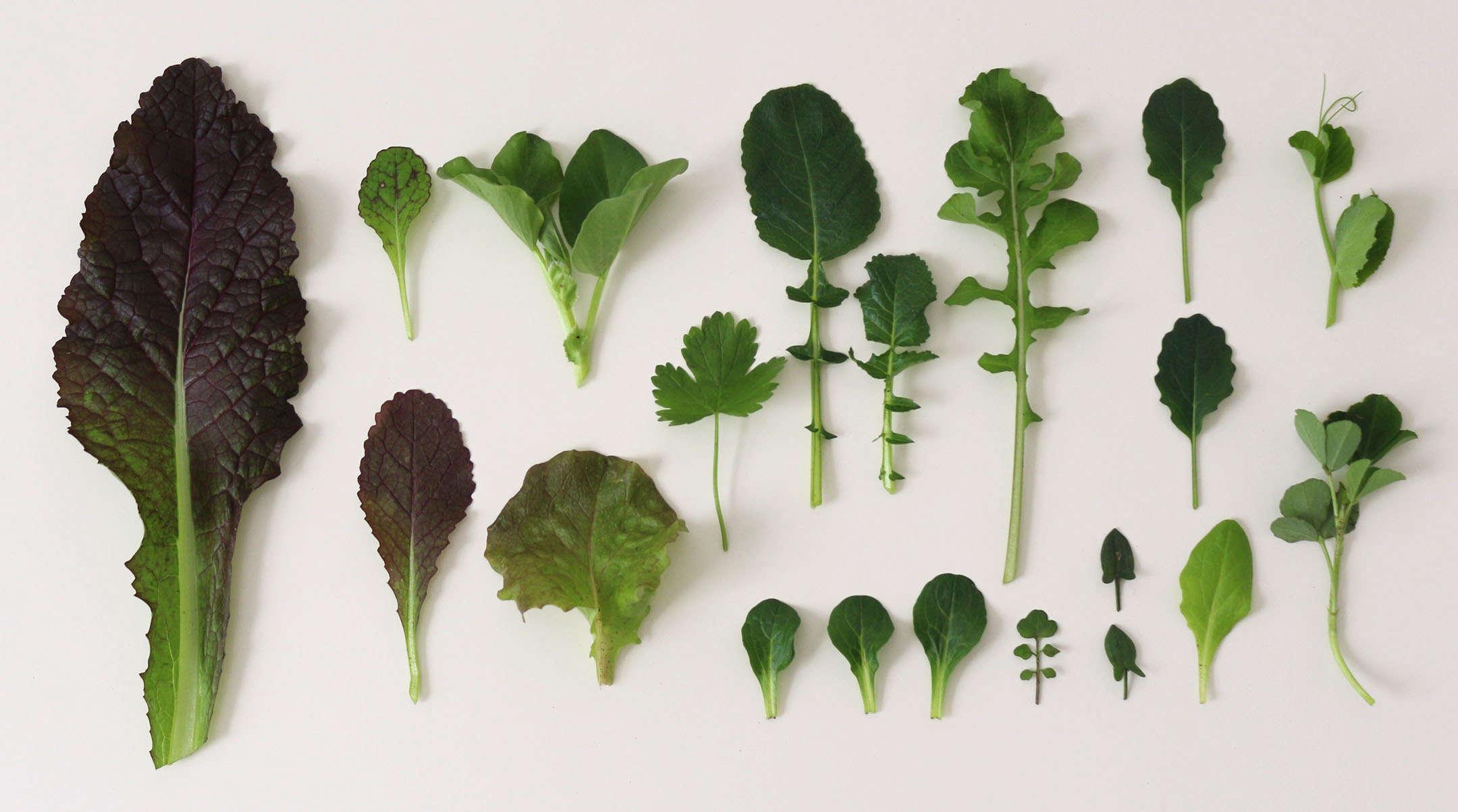 8 Winter Garden Greens to Grow Now