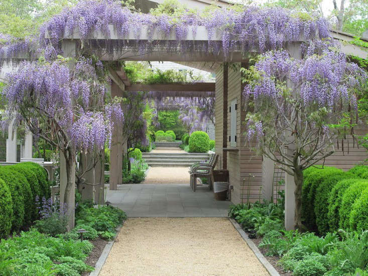 Plant Of The Week Wisteria