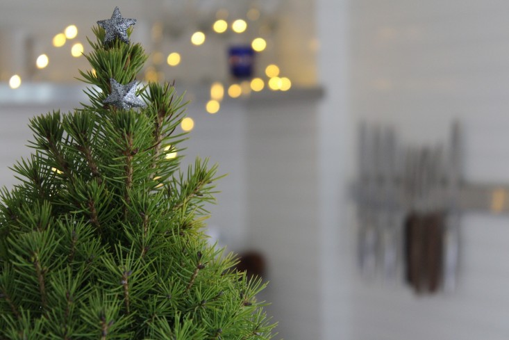 How to Pick Your Perfect Christmas Tree - Gardenista