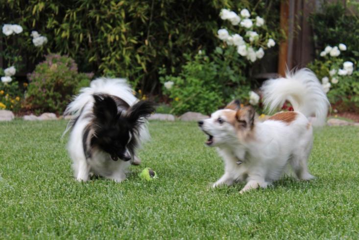 landscape ideas 11 ways to make your garden dog friendly gardenista