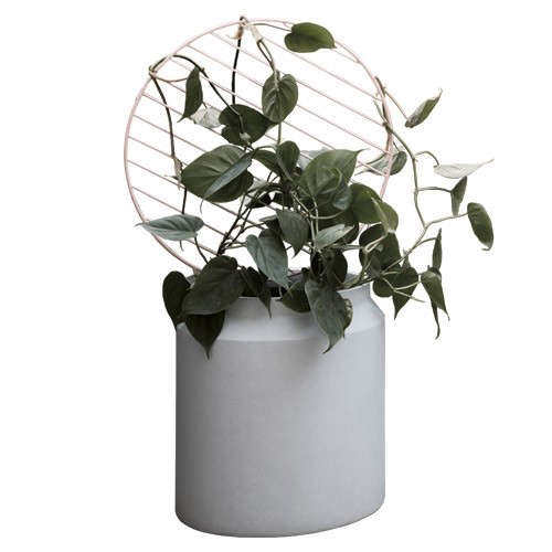 High Achievers Trellises And Pots For Indoor Vines And