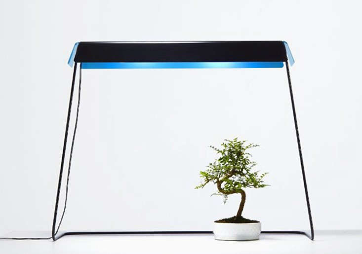 lighting for houseplants. Kusamono_grow-light-gardenista Lighting For Houseplants T