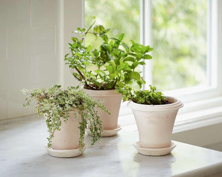 Diy Instant Indoor Herb Garden Gardenista