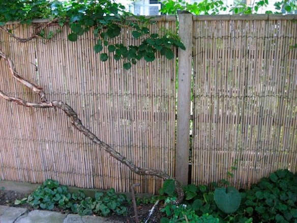 Bamboo Good Neighbor Fence