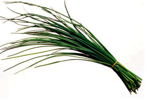 The Main Principles Of How Much Is Chives Seeds