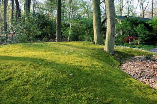 Hypnum Moss Sheet Moss