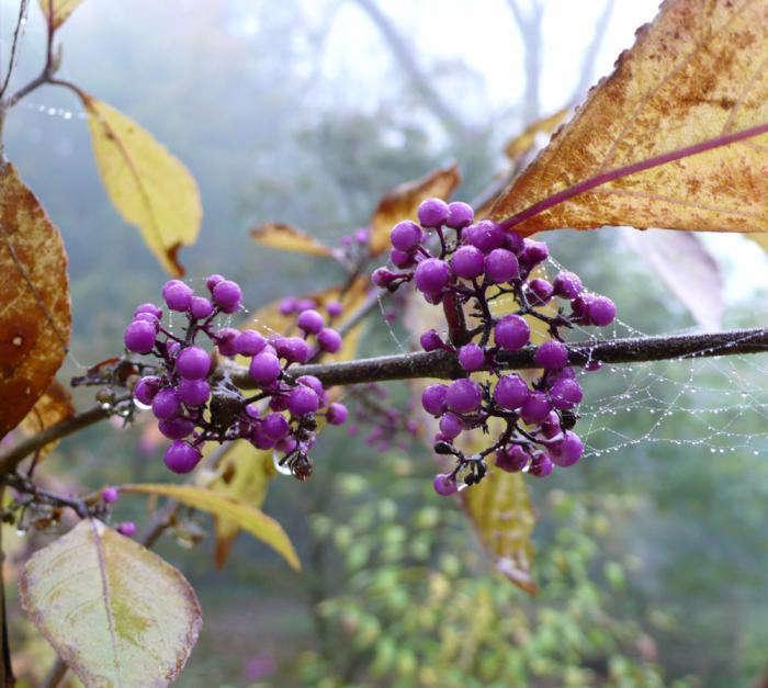 10 Tips For Gorgeous Garden Photos Gardenista