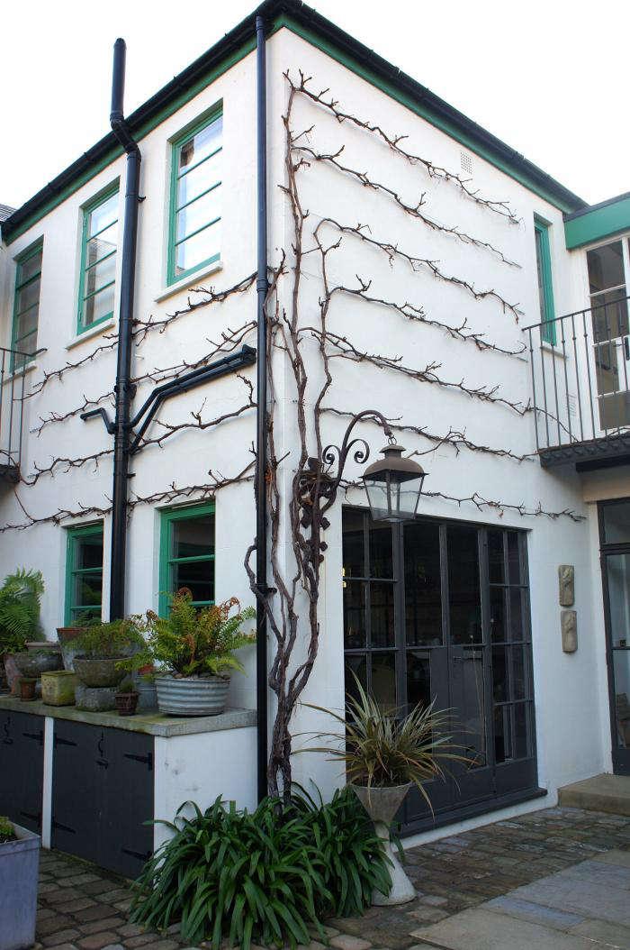 Design Sleuth Neisha Crosland S Espaliered Vines Gardenista