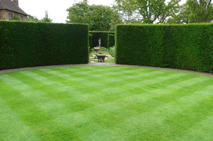 Renew With Yew: The Easiest (and Hardiest) Hedge for Your Garden ...