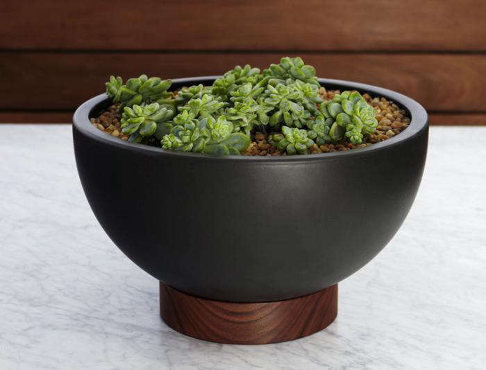 above the case study bowl plant pot with plinth 189 from modernica these ceramic black planters come with a plinth made of brazilian walnut