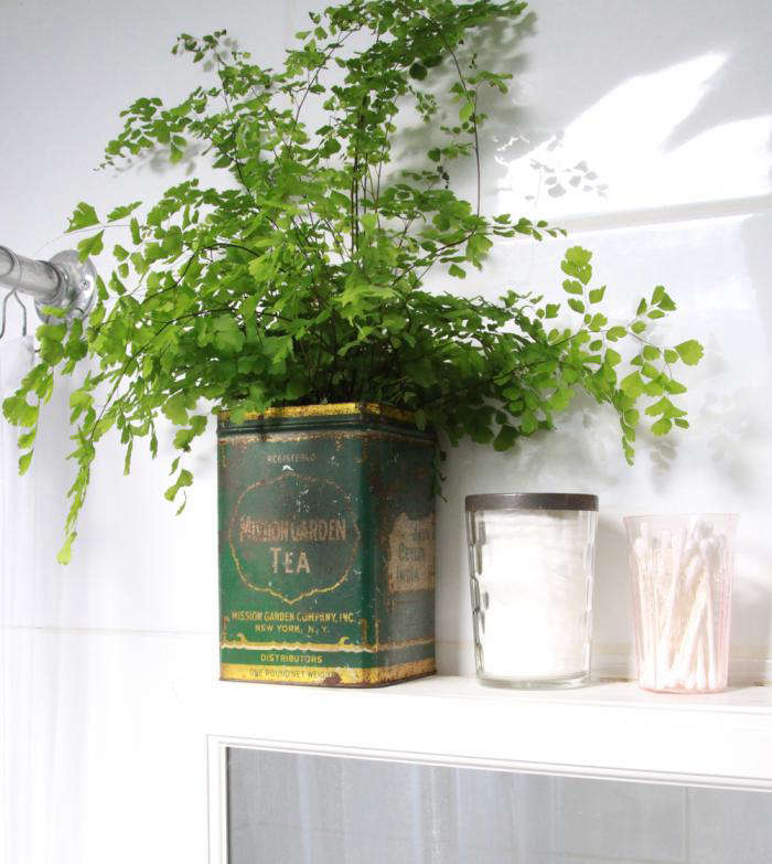 DIY Maidenhair Fern For Bathroom Greenery