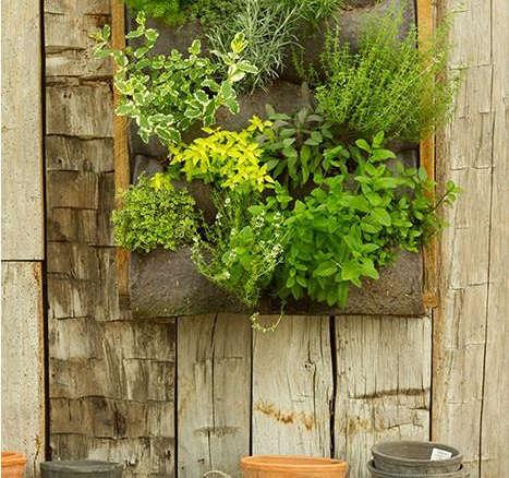 Vertical Garden Ideas Australia browse vertical gardens - gardenista