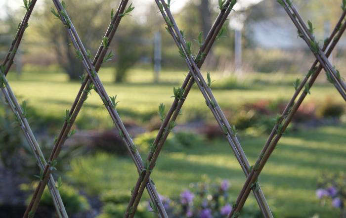 Above  For a completely integrated look  living willow fencing quite  literally grows with the rest of your garden  Image via Lakeshore Willows Garden Must Have  Woven Willow Fences and Trellises   Gardenista. Living Willow Fence Panels. Home Design Ideas