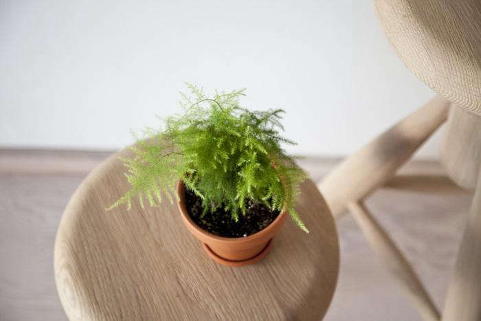 Small Potted Plants Pleting Balcony Garden Which Outdoor Indoor Favors
