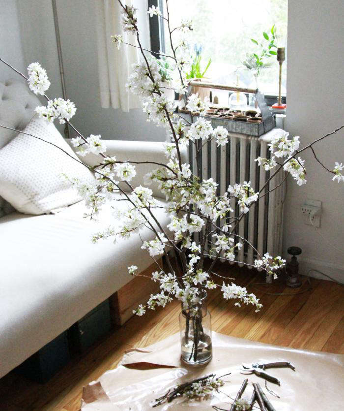 Diy The Magical Powers Of White Cherry Blossoms Gardenista