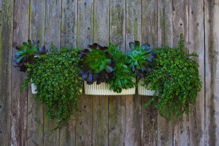 The Next Generation Vertical Garden: Woolly Pockets All Grown Up