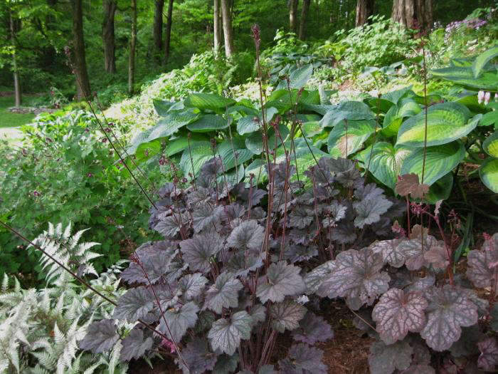 Design Sleuth The Ultimate Shade Garden Gardenista