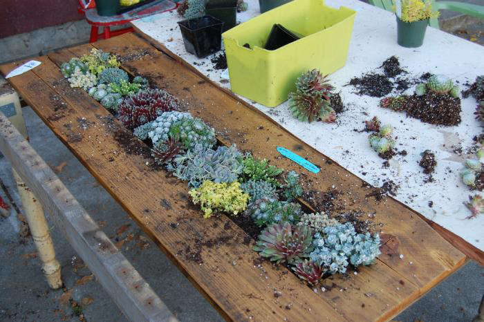 DIY: Succulents Table