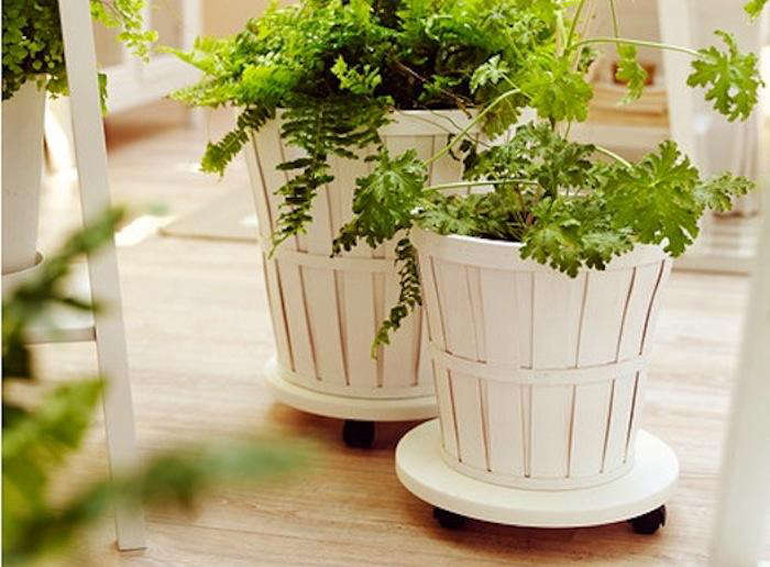 5 Favorites Rolling Plant Stands Gardenista