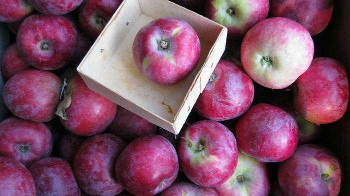 Ganz und zu Extrem California's Best Apples - Gardenista #WB_35