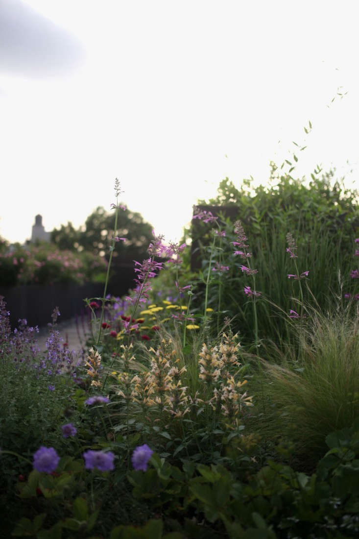 For more, see Dream Landscapes:  Perennial Garden Designs Inspired by Piet Oudolf. Photograph by Sophia Moreno-Bunge for Gardenista