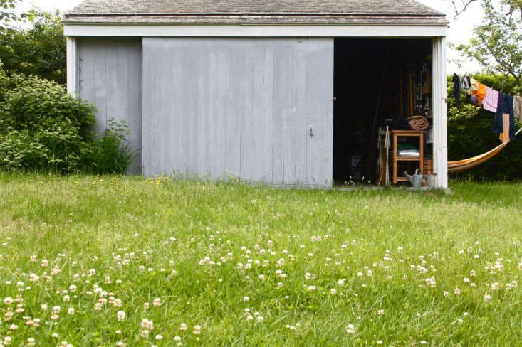 A clover-and-dandelion lawn. Photograph by Justine Hand.