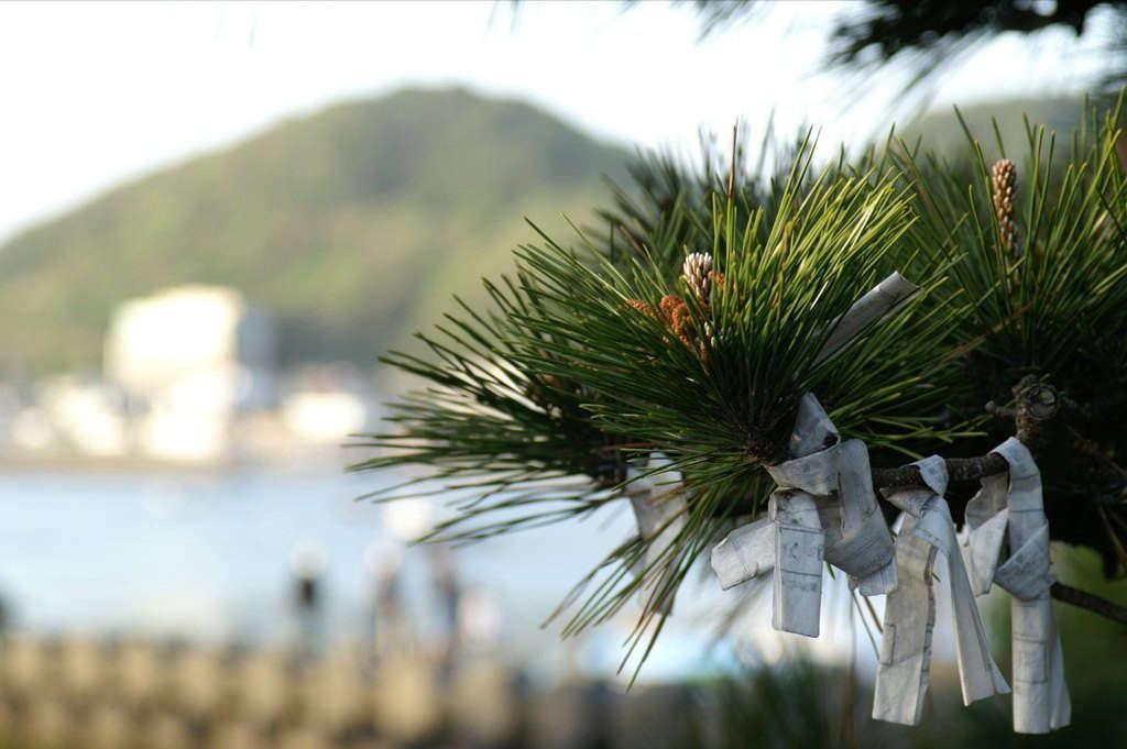 在日本报纸上,中国报纸上的两个字,他们在中国的阁楼里,他的花园里有一棵树。通过KiniadiSSE的SSA。