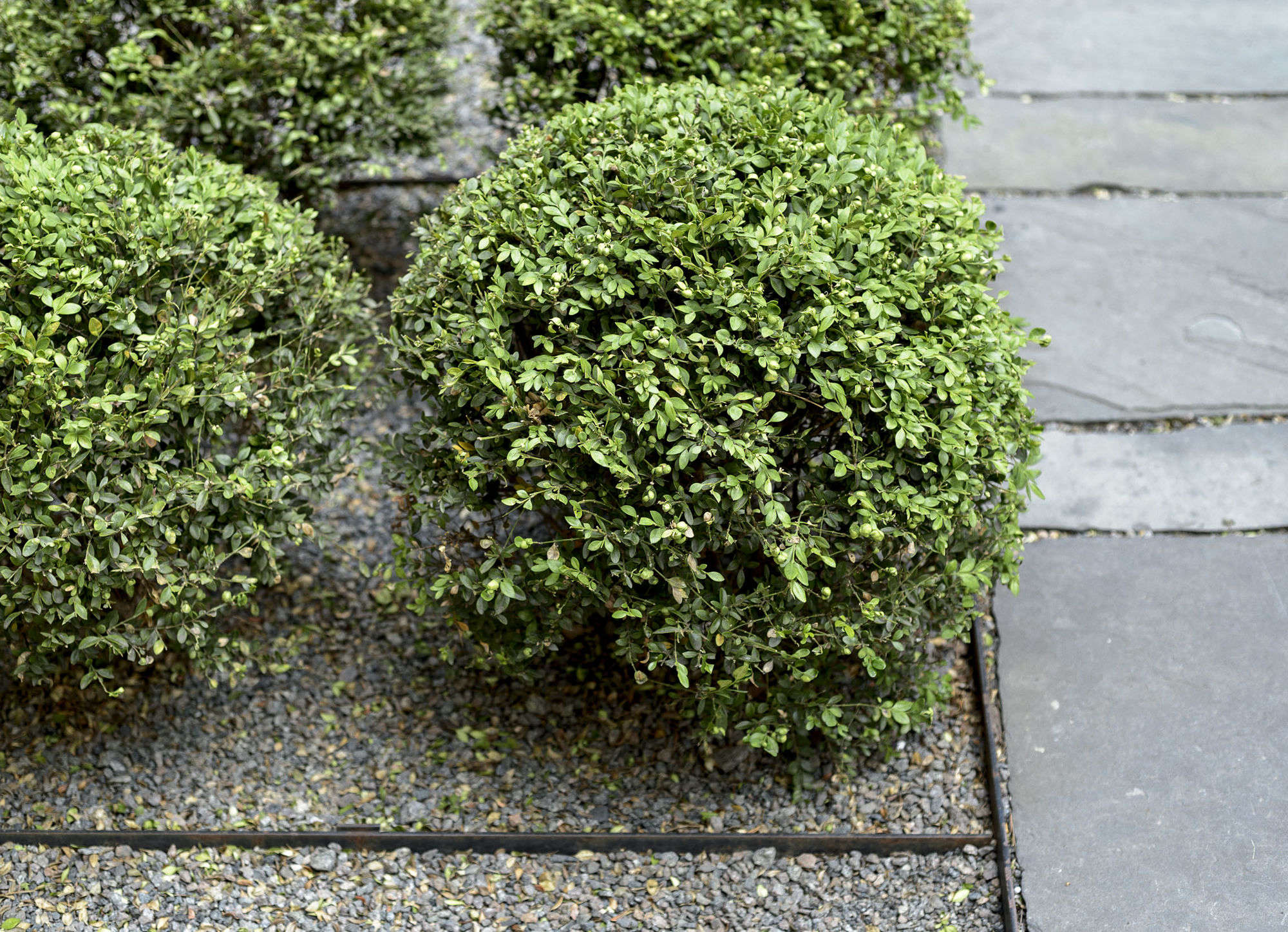 10 Things Your Landscape Designer Wishes You Knew About Gravel (But