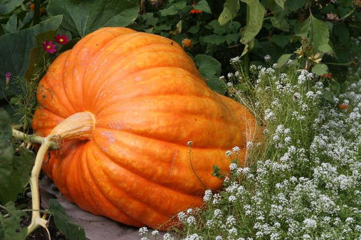 A fall favorite at McEvoy Ranch in Northern California. See California Colors: Fall at McEvoy Ranch in Petaluma.