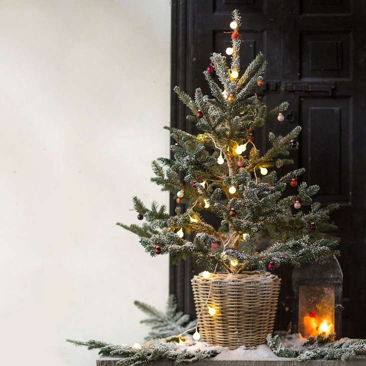 10 Easy Pieces: Tabletop Live Christmas Trees - Gardenista