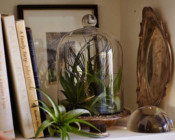 Gardening 101 How To Water An Air Plant Gardenista