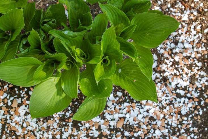 eggshell-mulch-gardenista