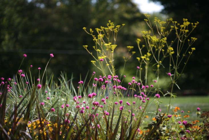 White Flower Farm Torrington Ct Images - Flower Decoration Ideas