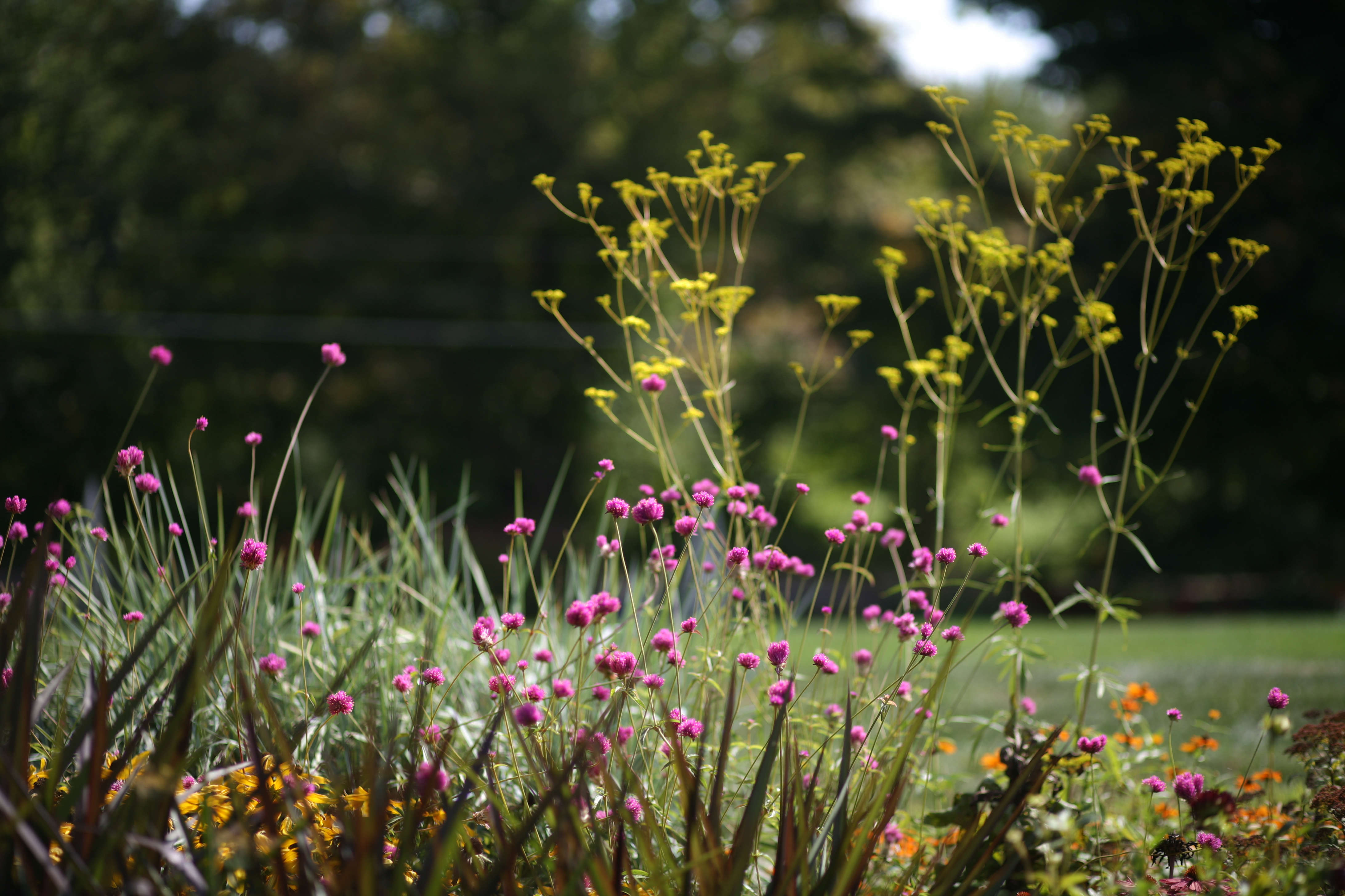 Flower borders 10 essential tips from white flower farms barb 4 dont plant in rows mightylinksfo