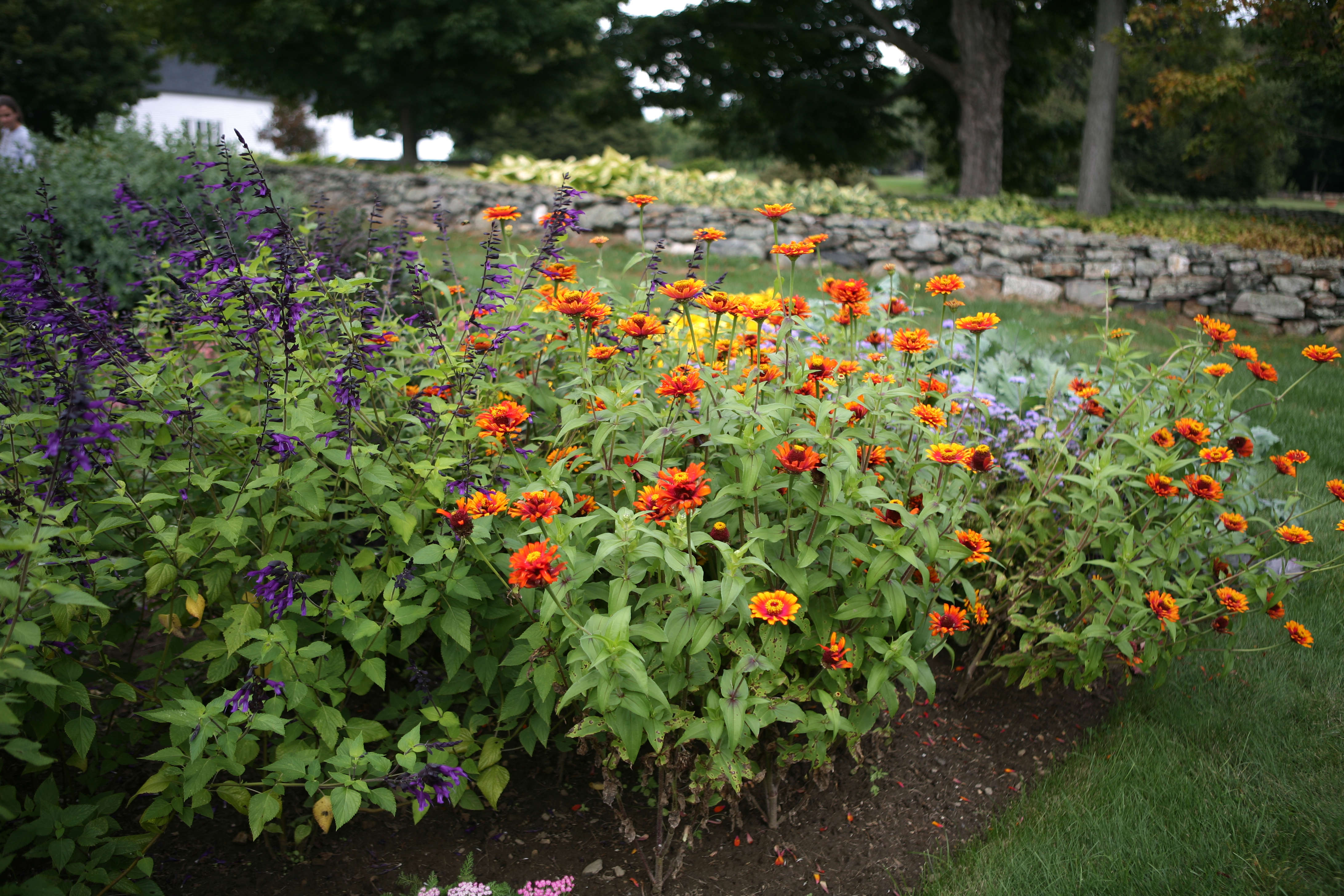 Flower borders 10 essential tips from white flower farms barb 2 complementary colors mightylinksfo
