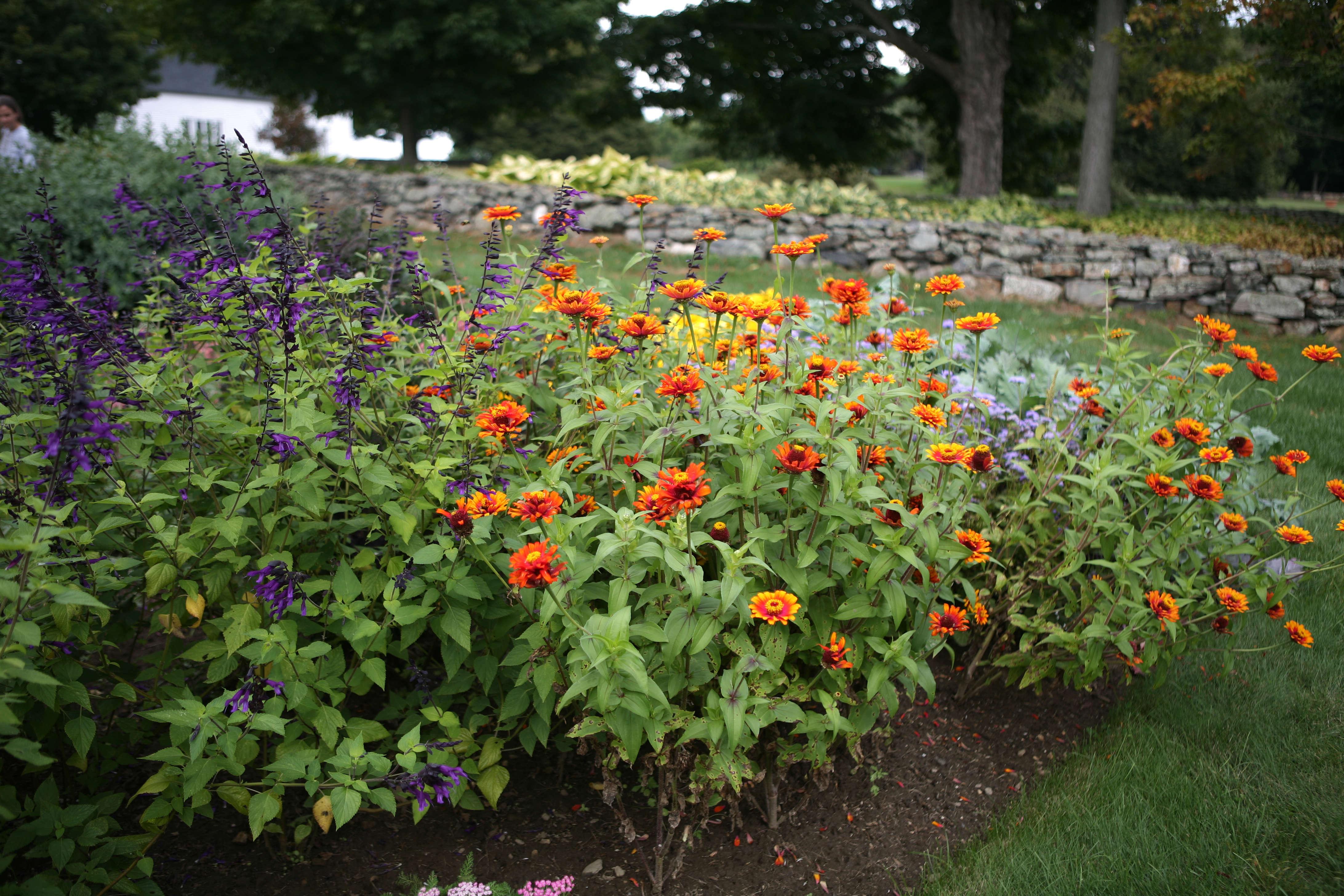 Flower Borders: 10 Essential Tips from White Flower Farm\'s Barb ...