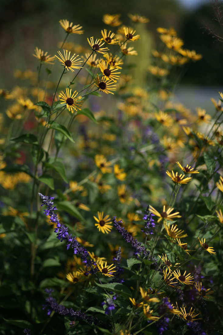 Flower borders 10 essential tips from white flower farms barb white flower farm yellow flowers gardenista mightylinksfo