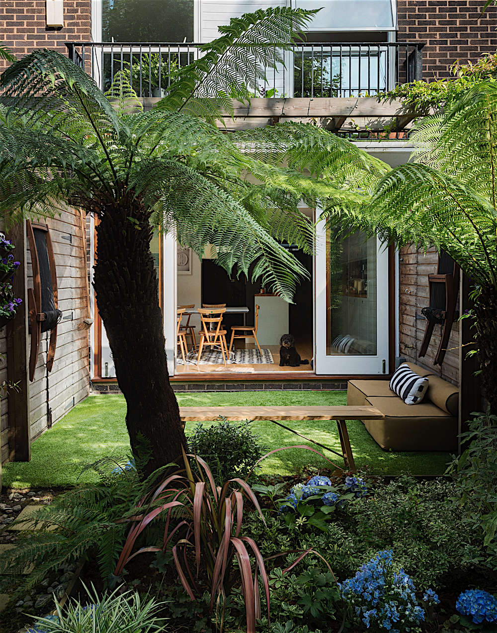 jurassic park ferns - Garden Ideas London