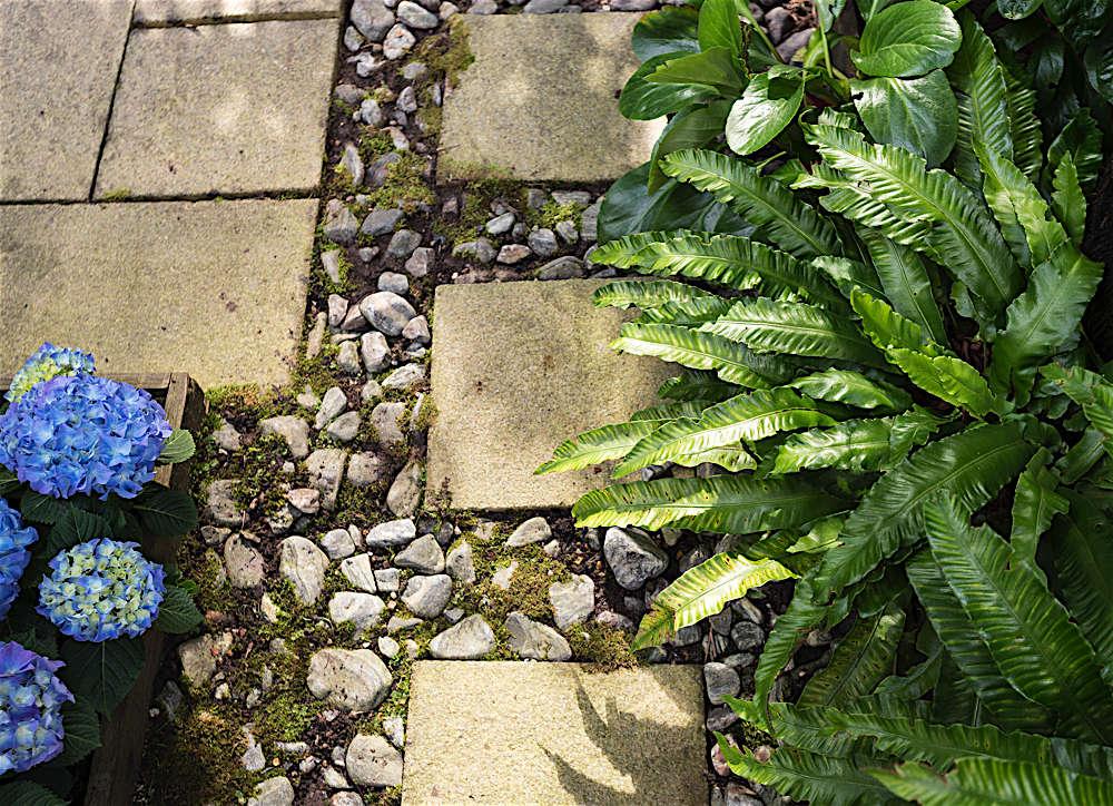Christine Chang Hanway, London garden, Garden as exterior room, blue hydrangeas, pebbles and pavers, Matthew Williams | Gardenista