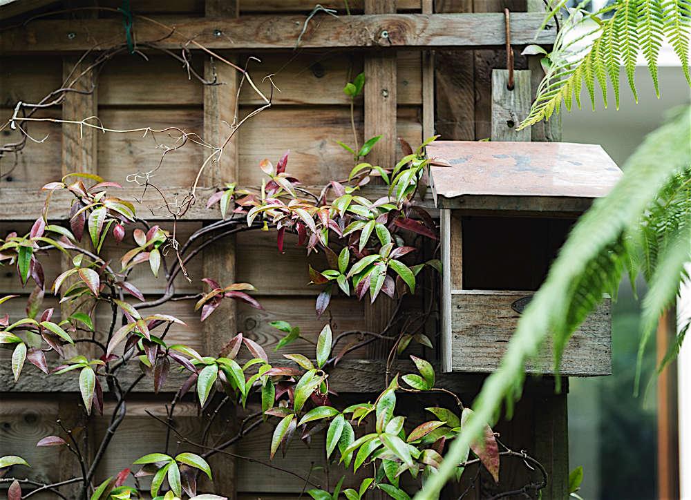 Christine Chang Hanway, London garden, Garden as exterior room, jasmine climbing on trellis wall, Matthew Williams | Gardenista