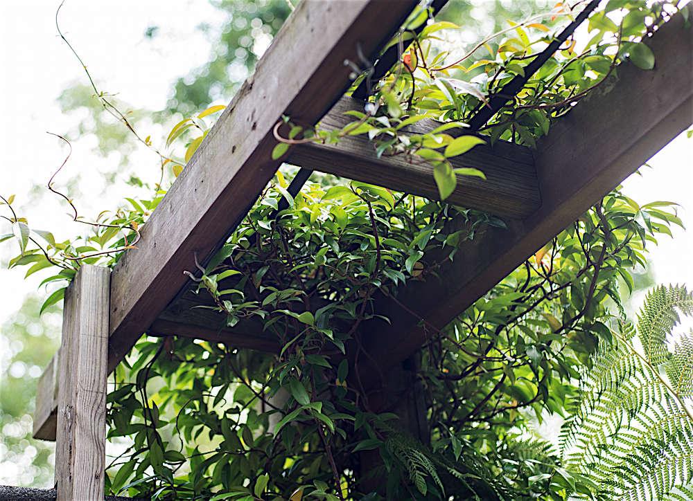 Christine Chang Hanway, London garden, Garden as exterior room, jasmine climbing on trellis, Matthew Williams | Gardenista