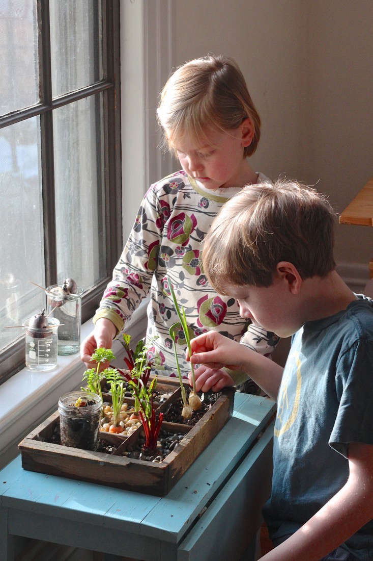 Grow An Indoor Garden Diy grow an indoor compost garden gardenista compost garden and kids 733x1100 workwithnaturefo