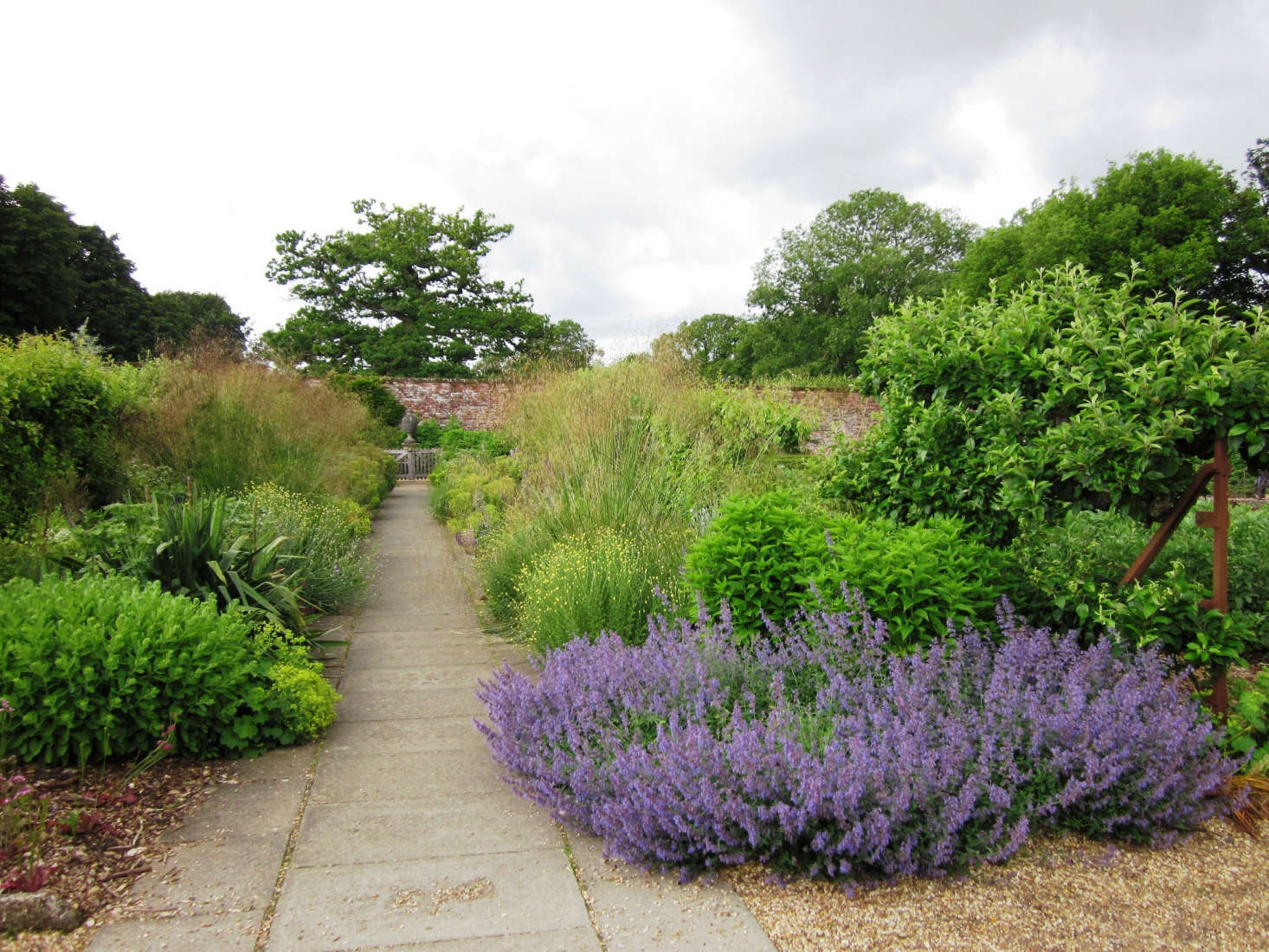 Lavender In Bloom In The Hinton Ampner Gardens In Hampshire. Photograph By  Leimenide Via Flickr